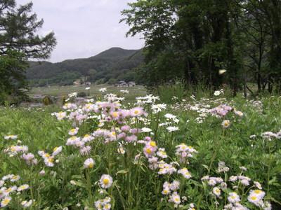 お花畑2.JPG