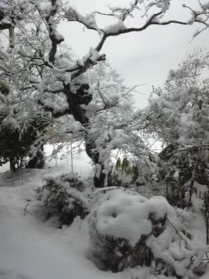 春のドカ雪.jpg
